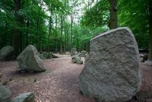 Findlingswald in Neuenknick